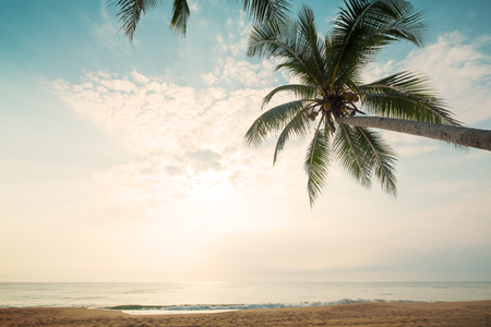 Fondo d'annata della natura - paesaggio dell'albero del cocco sulla spiaggia tropicale di estate. Concetto di sfondo estivo. effetto filtro retrò