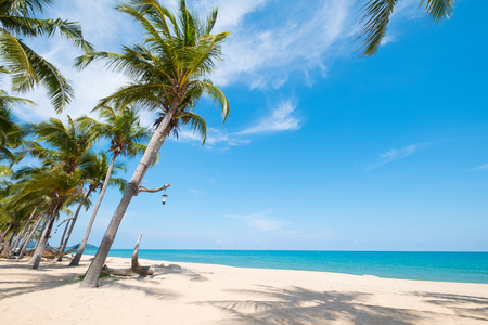 Landschap van kokosnotenpalm op tropisch strand in de zomer. Zomer achtergrond concept. Stockfoto
