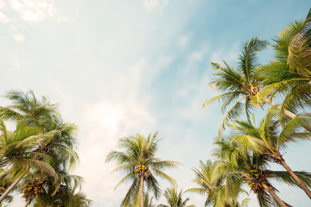 Palm tree on tropical beach with blue sky and sunlight in summer, up risen angle. Stockfoto