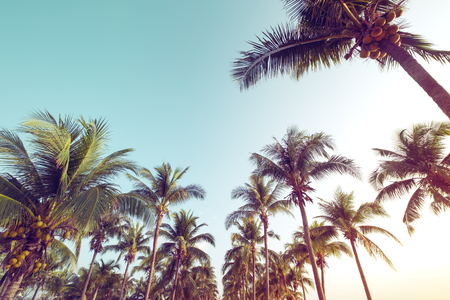 Vintage nature background - coconut palm tree on tropical beach blue sky with sunlight of morning in summer, uprisen angle.