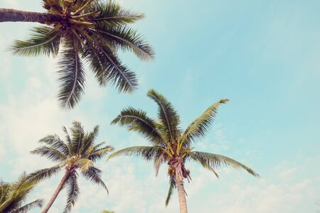 Palm tree on tropical beach with blue sky and sunlight in summer, uprisen angle. vintage phptp filter effect