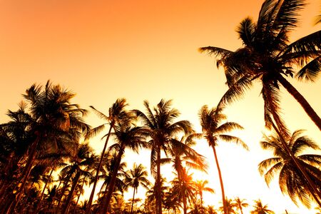 Silhouette of tropical beach during sunset twilight.