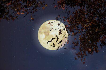 Piękna jesienna fantazja - klon w sezonie jesiennym i pełnia księżyca z gwiazdą. Styl retro z odcieniem koloru vintage. Halloween i Święto Dziękczynienia w koncepcji tła nocnego nieba. Zdjęcie Seryjne