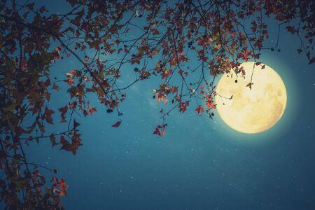 Belle fantaisie d'automne - érable en automne et pleine lune avec étoile. Style rétro avec ton de couleur vintage. Halloween et Thanksgiving dans le concept de fond de ciel nocturne.