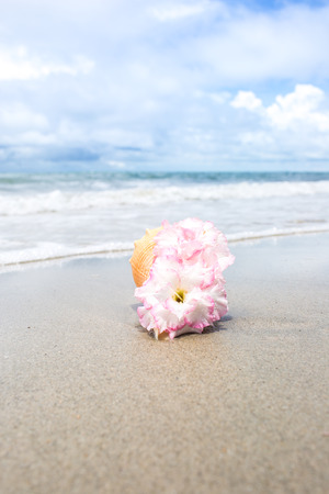 Flowers In Seashell Vase On The Beach Stock Photo Picture And