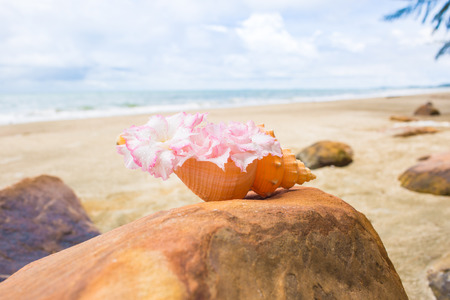 Flowers In Seashell Vase On The Rock With Seascape Background Stock