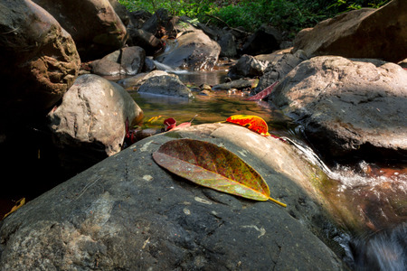 dried leaf: Dried leaf on rock with waterway background in deep forest. Stock Photo