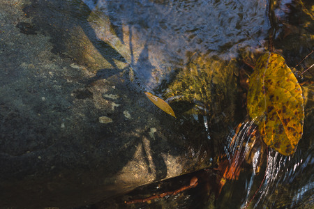 Dried leaf on rock with waterway background in deep forest. photo