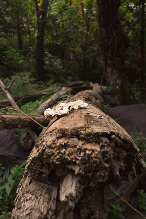 fungi: Fungi on dead log with natural light in deep forest.