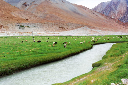 Animals with natural landscape in Leh Ladakh, Jammu and Kashmir, India