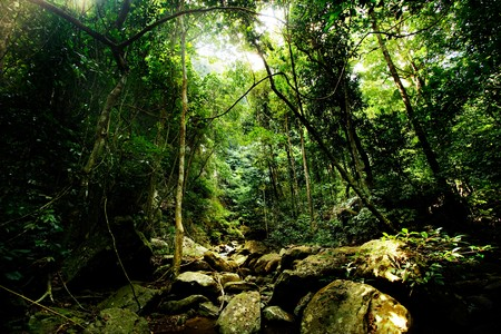 Sun light in deep rainforest at kangkajan,Thailand. Stock Photo - 7517361