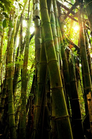 Sunbeam and big bamboo in the deep rainforest ,Tungyainarasuan,Kanjanaburee,Thailand. Stock Photo - 7517215