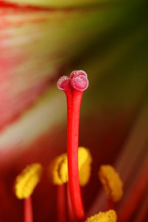spiffy: pollen