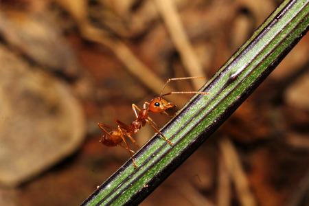 teeny: Ants Stock Photo