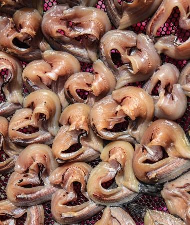 snake head fish: Tailandesi tradizionali pesci conservati Archivio Fotografico