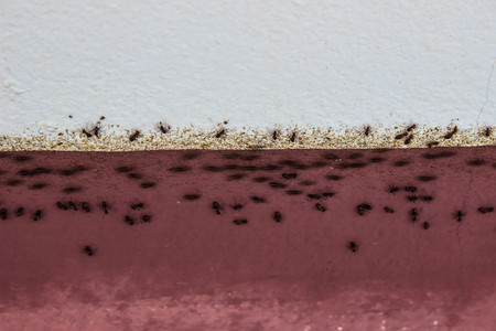 prevent: Top view of the chain of ants, which moves in the light of the rough plaster wall.