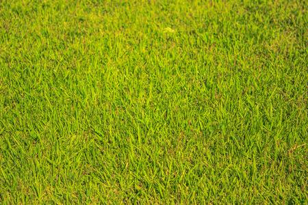 greensward field background Green field