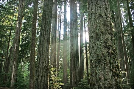 rainforest as seen in british columbia, canada.