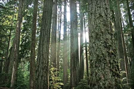 rainforest as seen in british columbia, canada. Stock Photo - 9567908