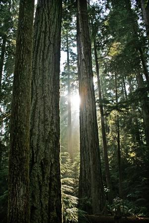 beautiful mystic rainforest