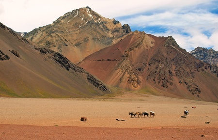 el chalten: beautiful mountain landscape with group of horses in front as seen in the wilderness of argentina, south america.
