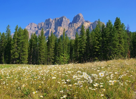 beautiful nature landscape with rocky mountains in the background as seen in british columbia, canada photo