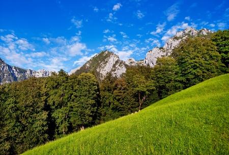 blumen: scenic nature landscape in bavaria, germany