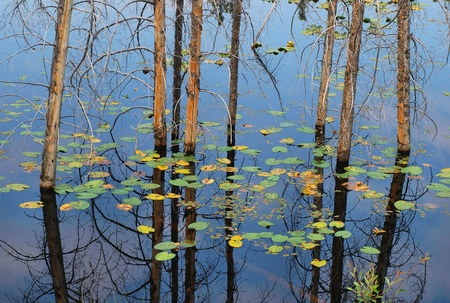 fused: row of trees sticking out of water