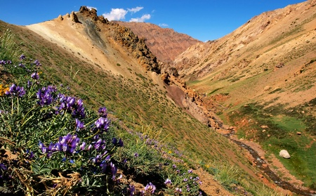 plateau of flowers: Beautiful nature landscape as seen in Mendoza, Argentina, South America. Stock Photo