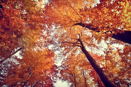Beautiful autumn fall forest scene photo