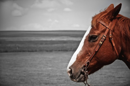 Head of brown-reddish horse photo