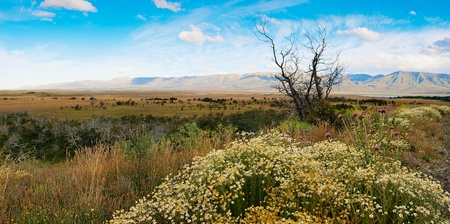 horcones: Bella la natura in paesaggio panorama Parco Nazionale Los Glaciares, in Argentina