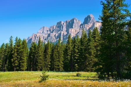Beautiful summer landscape in Jasper National Park, Alberta, Canada  photo