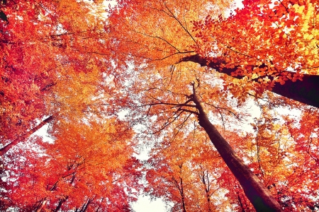 Beautiful autumn forest photo