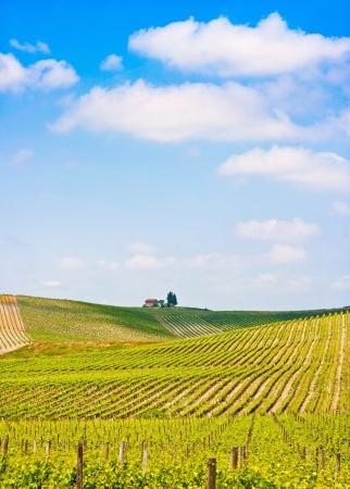 Scenic paisaje de Toscana con el viñedo en la región de Chianti, Toscana, Italia
