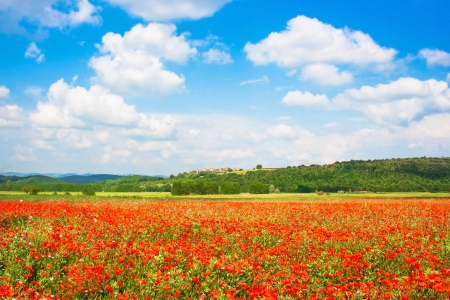 Beautiful field of red poppy flowers with blue sky and the medieval village of Monteriggioni in the background, Tuscany, Italy