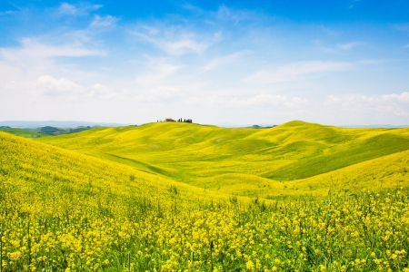 orcia: Beautiful Tuscany landscape with field of flowers in Val d Orcia, Italy
