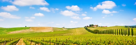 Panoramic view of scenic Tuscany landscape with vineyard in the Chianti region, Tuscany, Italy Banco de Imagens - 19124617