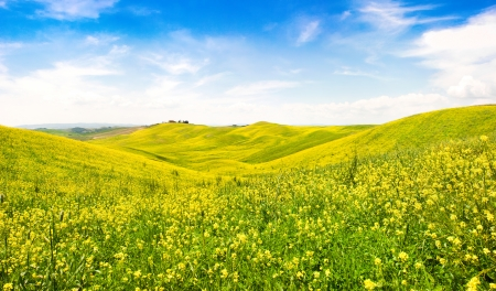 val d'orcia: Beautiful Tuscany landscape with field of flowers in Val d Orcia, Italy