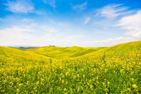 val: Beautiful Tuscany landscape with field of flowers in Val d Orcia, Italy