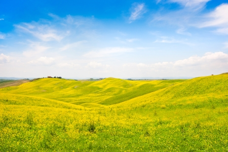 Beautiful Tuscany landscape with field of flowers in Val d Orcia, Italy  photo