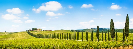 tuscan: Panoramic view of scenic Tuscany landscape with vineyard in the Chianti region, Tuscany, Italy