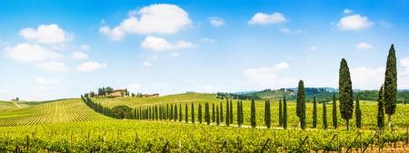 Vista panorámica del paisaje escénico de Toscana con viñedos en la región de Chianti, Toscana, Italia