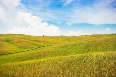 val d'orcia: Beautiful view of scenic Tuscany landscape in Val d Orcia, Italy