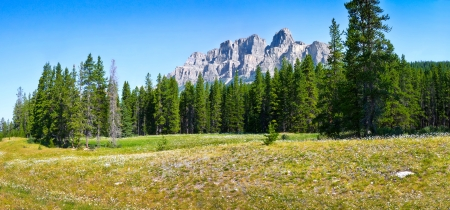 british columbia: Panoramic view of beautiful landscape with field of flowers and Rocky Mountains in the background in Jasper National Park, Alberta, Canada Stock Photo