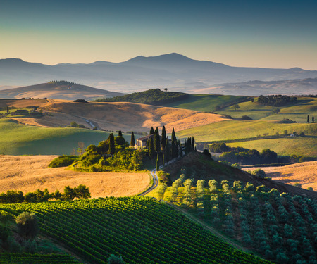 san quirico: Scenic Tuscany landscape with rolling hills and valleys in golden morning light, Val d Orcia, Italy