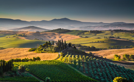 wine road: Scenic Tuscany landscape with rolling hills and valleys in golden morning light, Val d Orcia, Italy