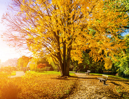 colorful leaves: Beautiful autumn scene in park in golden morning light at sunrise