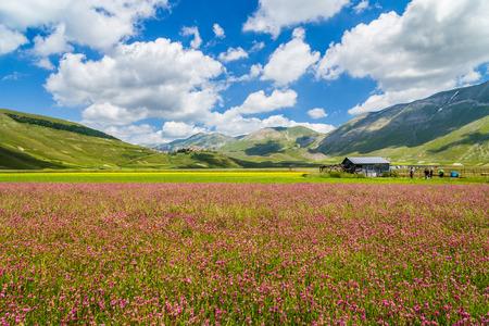 abruzzo: Beautiful summer landscape at Piano Grande mountain plateau in the Apennine Mountains, Castelluccio di Norcia, Umbria, Italy