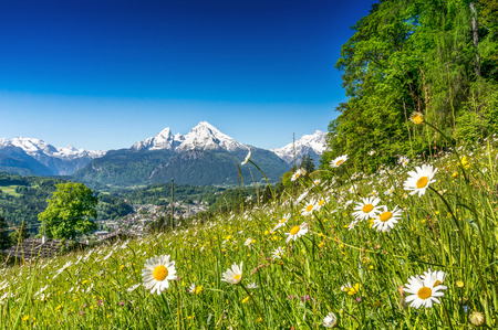 Panoramic view of beautiful mountain landscape in the Alps with green mountain pastures with flowers and snow capped mountains in the background in springtime Stockfoto
